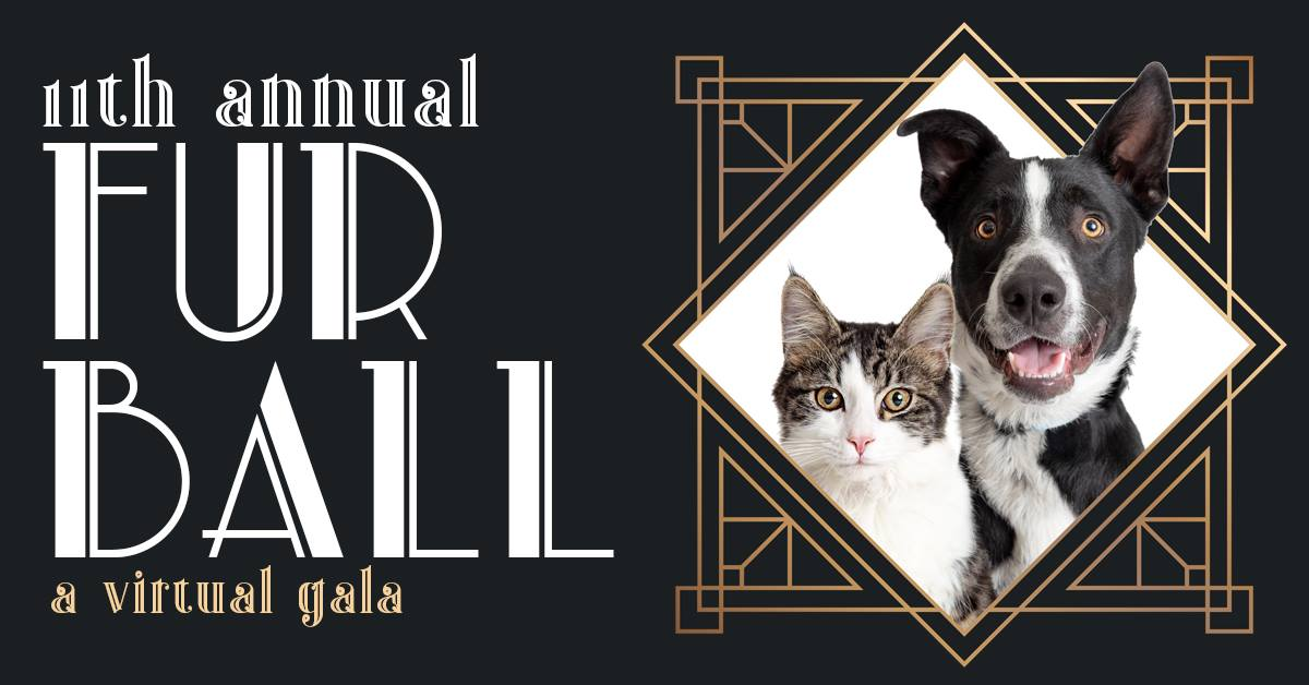 Fur Ball Announcement
