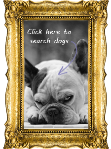 Browse Adoptable Dogs