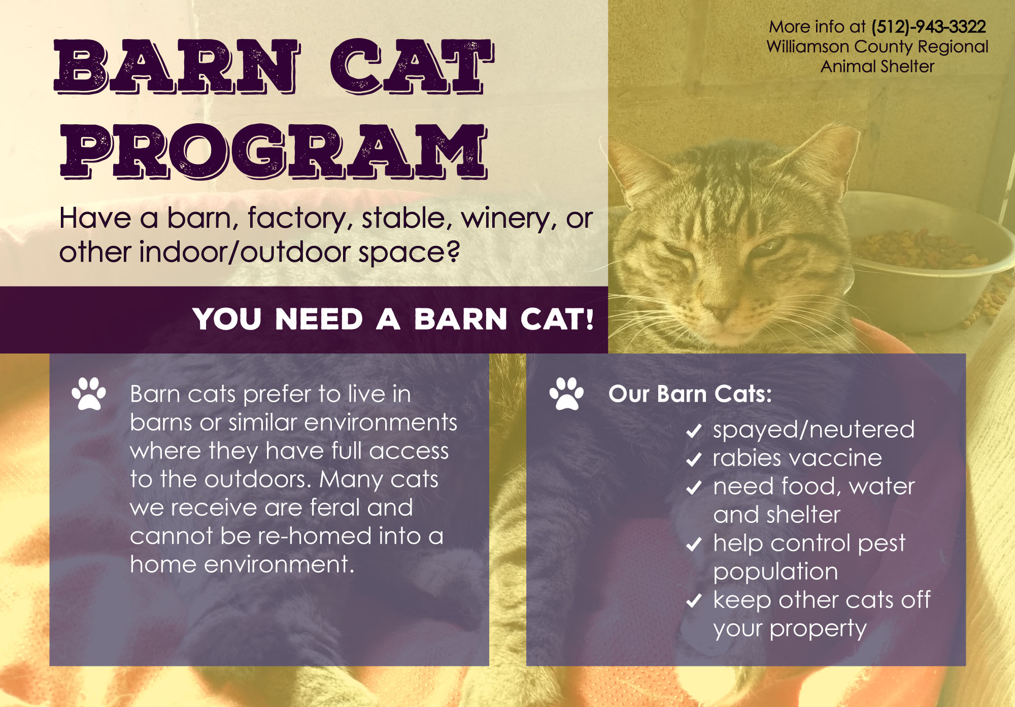 Barn Cat ProgramHave a barn, factory, stable, winery or other indoor/outdoor space? You need a barn cat! Barn cats prefer to live in barns or similar environments where they have full access to the outdoors. Many cats we receive are feral and cannot be re-homed into a home environment. More info at 512-943-3322 Williamson County Animal Shelter