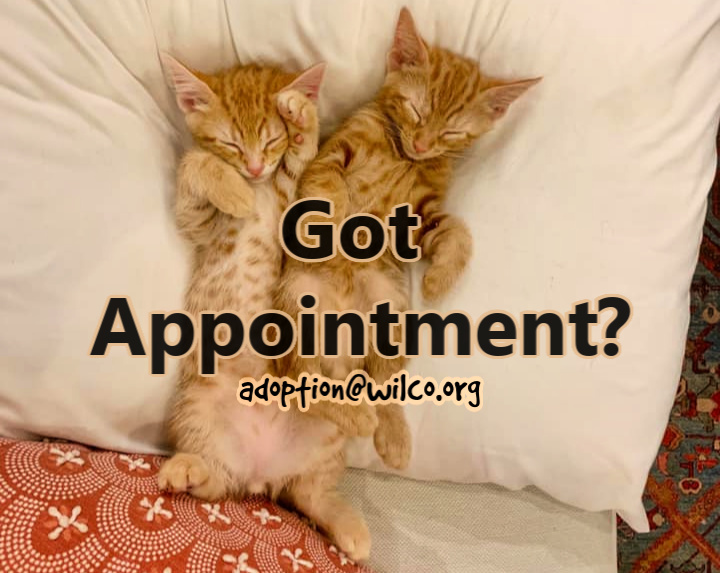 Got an Appointment
