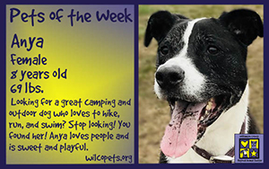 07-30-2018Pet of the Week - Dogsmall