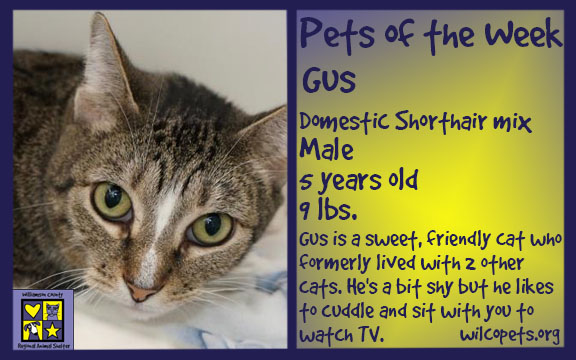 08-21-2018Pet of the Week - Cat636706553017742450