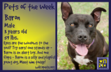 06-18-2018Pet of the Week - Dog