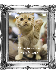 Search Adoptable Cats