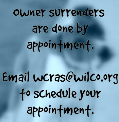 Owner surrenders are done by appointment. Email wcras@wilco.org to schedule your appointment.